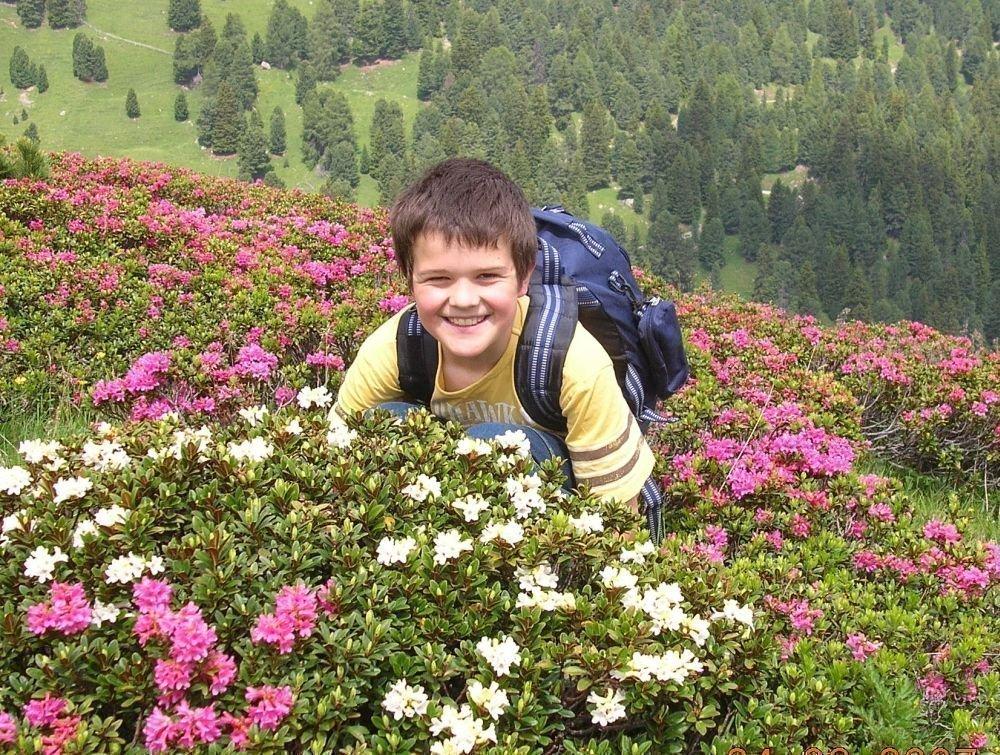 alpenrosenwanderung Sommer