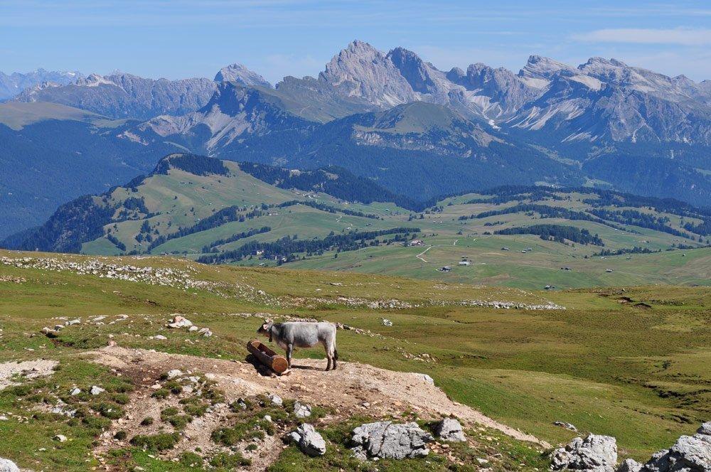 blick vom schlern ueber die seiser alm zur geislergruppe Naturpark Schlern Rosengarten: Compatsch   Saltnerhütte   Schlernhaus   Tierser Alpl   Compatsch