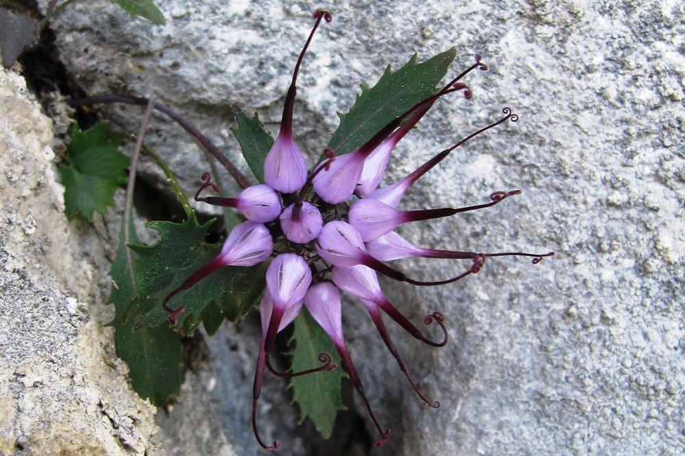 blumenwanderung Flower Hikes