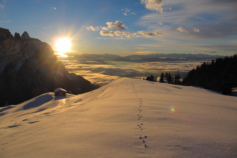 hasenspur im tiefen schnee La nostra fauna in inverno