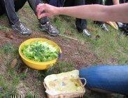 thumbs essbare blueten bereichern den salat nicht nur optisch Wildkräuterwanderungen
