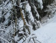 thumbs auch rinden helfen den hunger stillen La nostra fauna in inverno